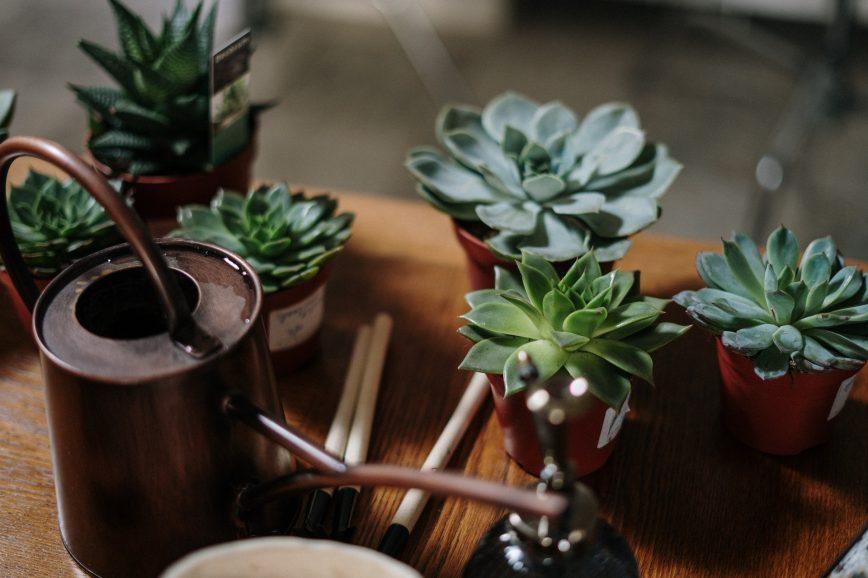 Идеи для интерьера: растения, за которыми не надо ухаживать