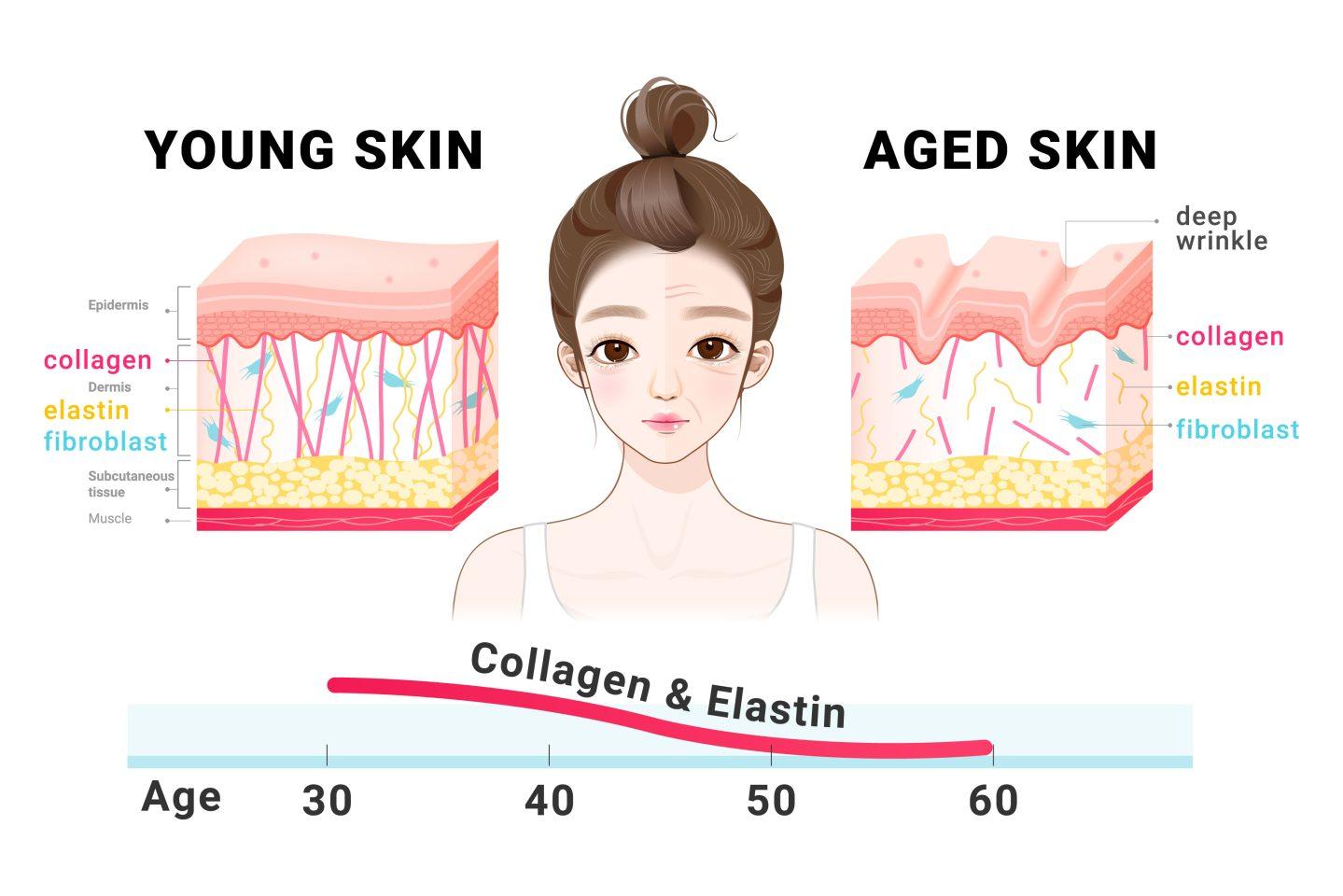 Старение кожи не зависит от тонуса мышц