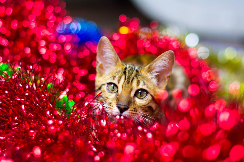 подарок самой себе: кот