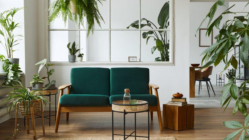 сайт комнатные растения