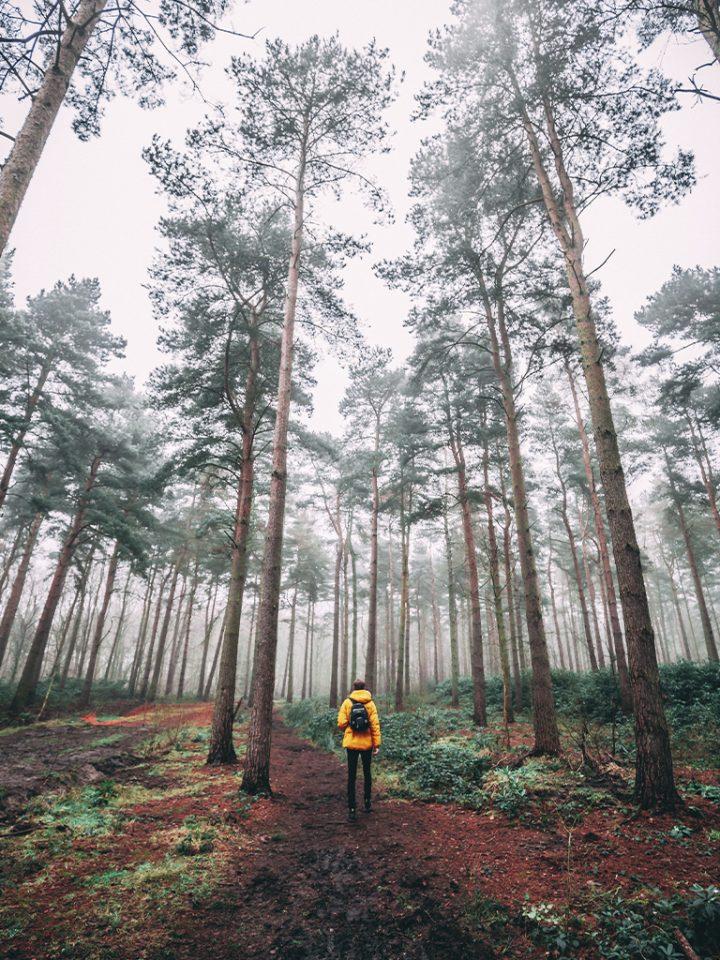 что взять с собой в лес